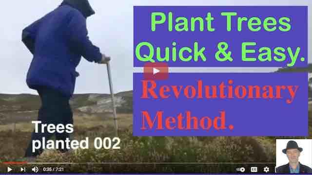 plant trees rewilding stick